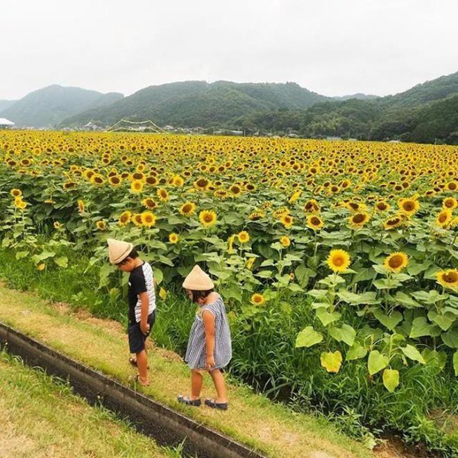 Ngôi nhà nhỏ và cuộc sống đơn sơ của gia đình Nhật Bản ở làng quê khiến bao người ngưỡng mộ - Ảnh 18.