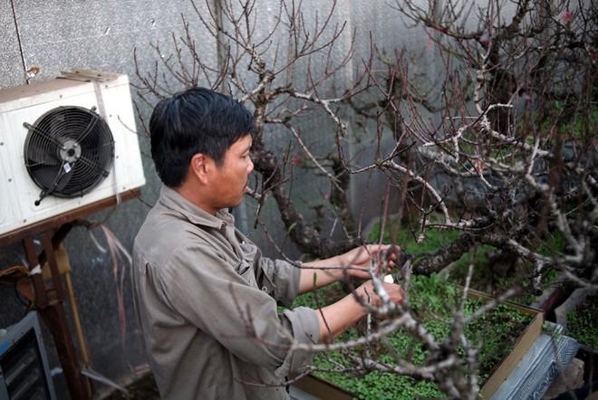 Hà Nội: Người dân lắp điều hòa, bật quạt sưởi, bọc nilon chống rét cho đào Tết - Ảnh 2.