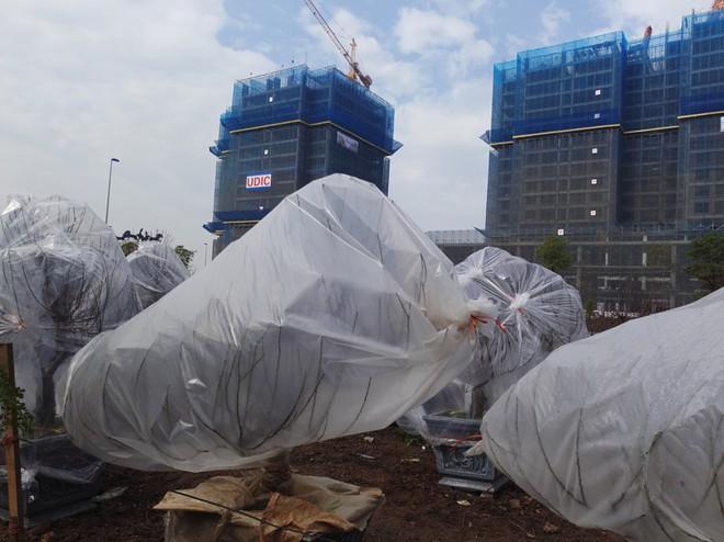 Hà Nội: Người dân lắp điều hòa, bật quạt sưởi, bọc nilon chống rét cho đào Tết - Ảnh 9.