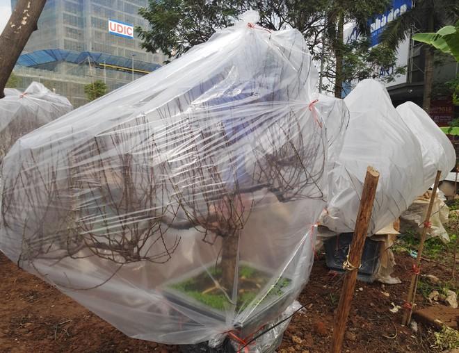 Hà Nội: Người dân lắp điều hòa, bật quạt sưởi, bọc nilon chống rét cho đào Tết - Ảnh 10.