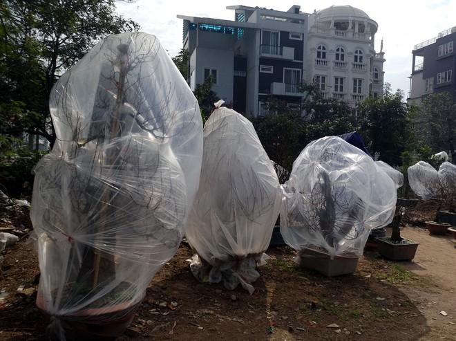 Hà Nội: Người dân lắp điều hòa, bật quạt sưởi, bọc nilon chống rét cho đào Tết - Ảnh 13.