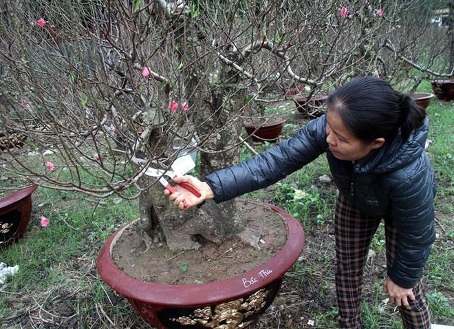 Hà Nội: Người dân lắp điều hòa, bật quạt sưởi, bọc nilon chống rét cho đào Tết - Ảnh 14.