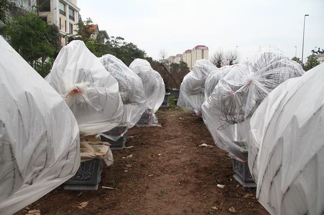 Hà Nội: Người dân lắp điều hòa, bật quạt sưởi, bọc nilon chống rét cho đào Tết - Ảnh 15.