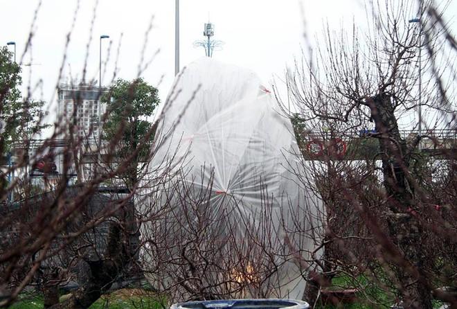 Hà Nội: Người dân lắp điều hòa, bật quạt sưởi, bọc nilon chống rét cho đào Tết - Ảnh 8.