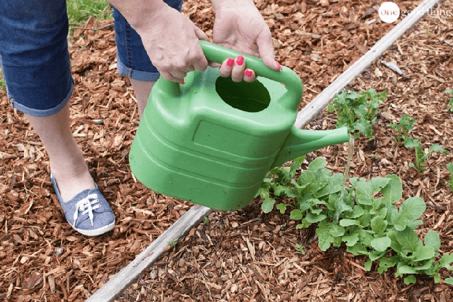 Hướng dẫn cách tự làm phân bón cho cây trồng vừa rẻ vừa an toàn cho khu vườn của bạn - Ảnh 6.