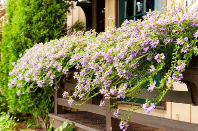 Ban công tràn ngập sắc hè nhờ trang trí với hoa tươi siêu ấn tượng - Ảnh 2.