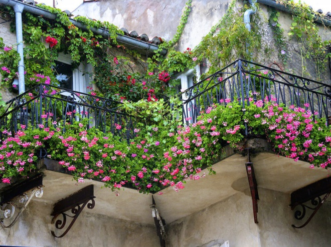 Ban công tràn ngập sắc hè nhờ trang trí với hoa tươi siêu ấn tượng - Ảnh 4.