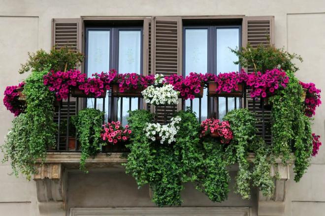 Ban công tràn ngập sắc hè nhờ trang trí với hoa tươi siêu ấn tượng - Ảnh 6.