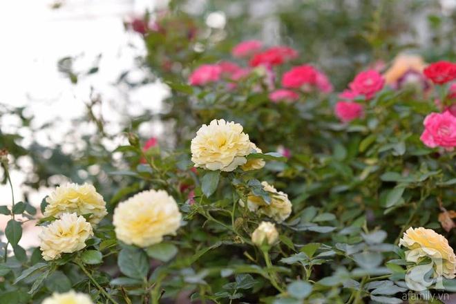 Mùng 1 Tết ghé thăm khu vườn hồng rực rỡ trồng trong chum vại độc đáo ở miền Trung - Ảnh 4.