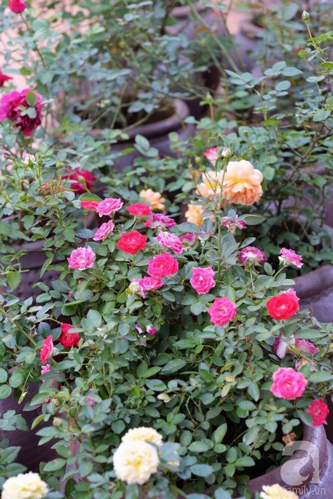 Mùng 1 Tết ghé thăm khu vườn hồng rực rỡ trồng trong chum vại độc đáo ở miền Trung - Ảnh 8.