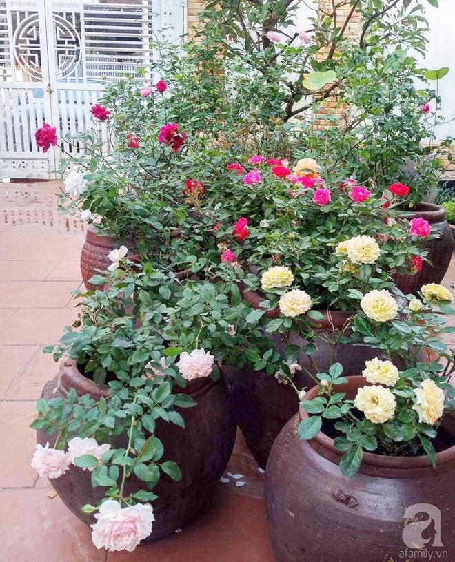 Mùng 1 Tết ghé thăm khu vườn hồng rực rỡ trồng trong chum vại độc đáo ở miền Trung - Ảnh 15.