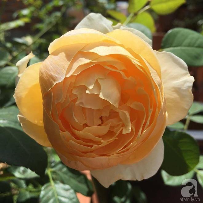 Mùng 1 Tết ghé thăm khu vườn hồng rực rỡ trồng trong chum vại độc đáo ở miền Trung - Ảnh 18.