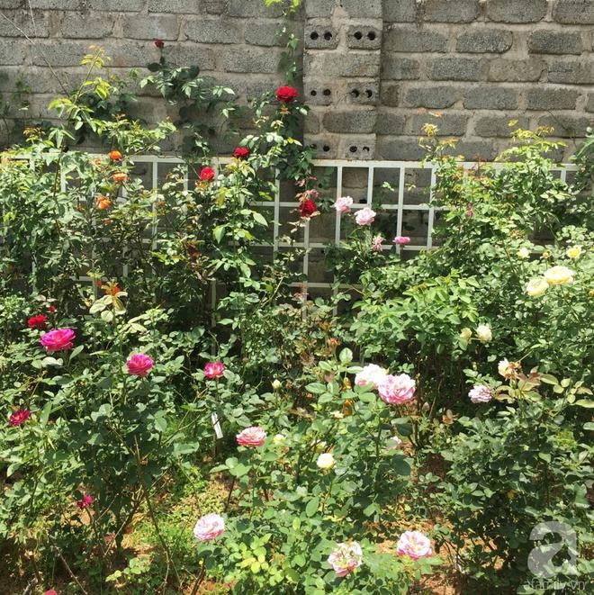 Mùng 1 Tết ghé thăm khu vườn hồng rực rỡ trồng trong chum vại độc đáo ở miền Trung - Ảnh 19.