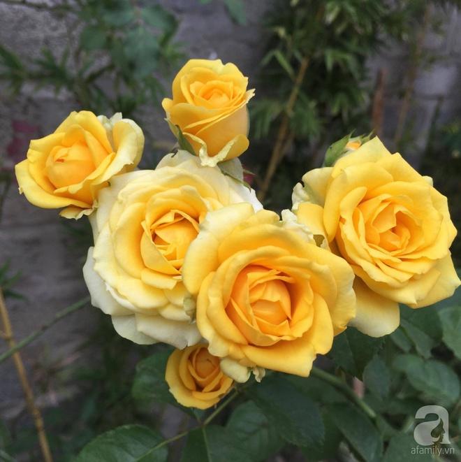 Mùng 1 Tết ghé thăm khu vườn hồng rực rỡ trồng trong chum vại độc đáo ở miền Trung - Ảnh 22.