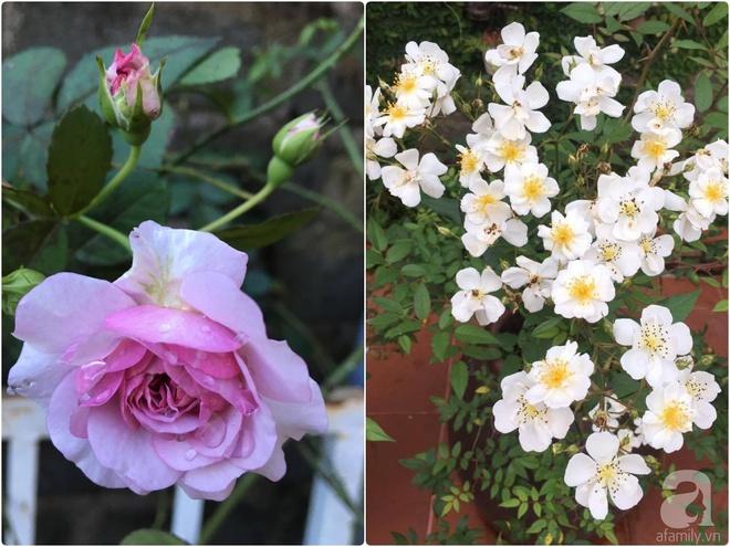 Mùng 1 Tết ghé thăm khu vườn hồng rực rỡ trồng trong chum vại độc đáo ở miền Trung - Ảnh 29.