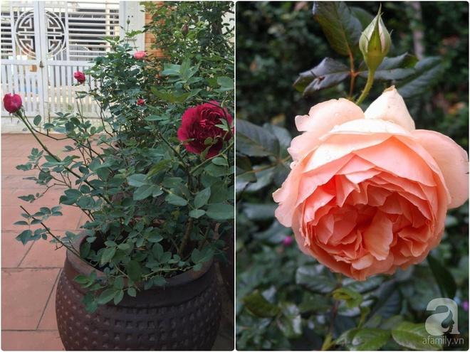 Mùng 1 Tết ghé thăm khu vườn hồng rực rỡ trồng trong chum vại độc đáo ở miền Trung - Ảnh 33.
