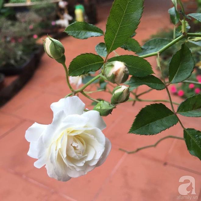 Mùng 1 Tết ghé thăm khu vườn hồng rực rỡ trồng trong chum vại độc đáo ở miền Trung - Ảnh 35.