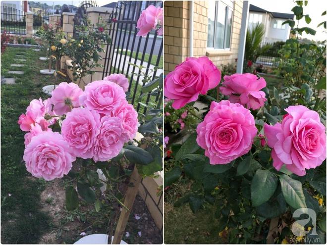 Chỉ mất 2 năm, bà mẹ trẻ đã phủ kín khu vườn rộng tới 200m² với hàng trăm loài hoa rực rỡ muôn màu - Ảnh 9.