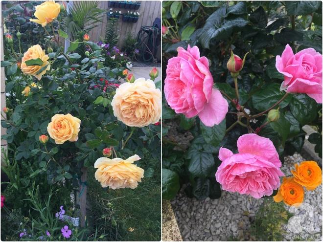 Chỉ mất 2 năm, bà mẹ trẻ đã phủ kín khu vườn rộng tới 200m² với hàng trăm loài hoa rực rỡ muôn màu - Ảnh 10.