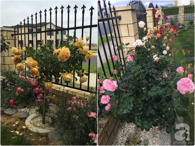 Chỉ mất 2 năm, bà mẹ trẻ đã phủ kín khu vườn rộng tới 200m² với hàng trăm loài hoa rực rỡ muôn màu - Ảnh 11.