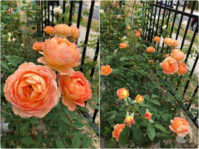 Chỉ mất 2 năm, bà mẹ trẻ đã phủ kín khu vườn rộng tới 200m² với hàng trăm loài hoa rực rỡ muôn màu - Ảnh 13.