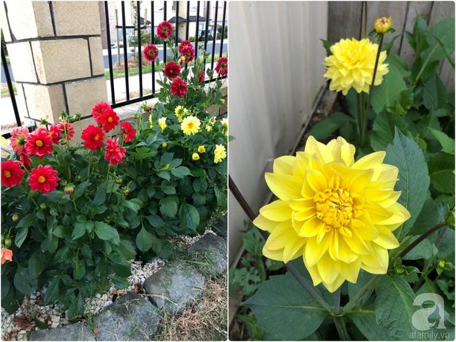Chỉ mất 2 năm, bà mẹ trẻ đã phủ kín khu vườn rộng tới 200m² với hàng trăm loài hoa rực rỡ muôn màu - Ảnh 17.