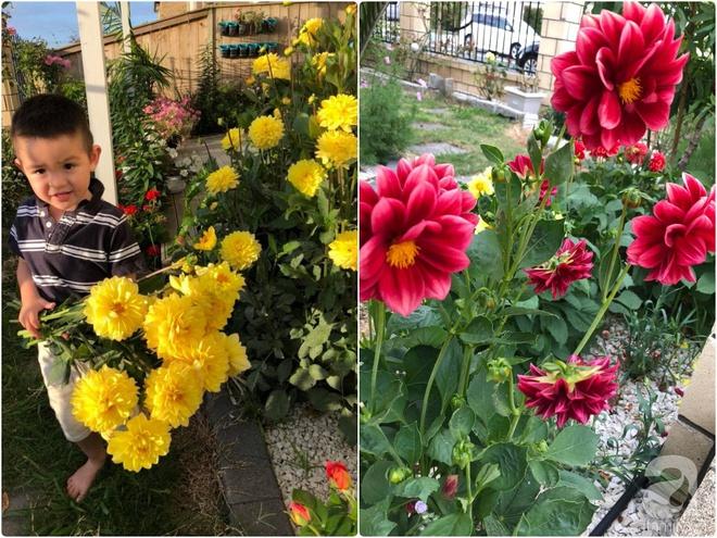 Chỉ mất 2 năm, bà mẹ trẻ đã phủ kín khu vườn rộng tới 200m² với hàng trăm loài hoa rực rỡ muôn màu - Ảnh 19.