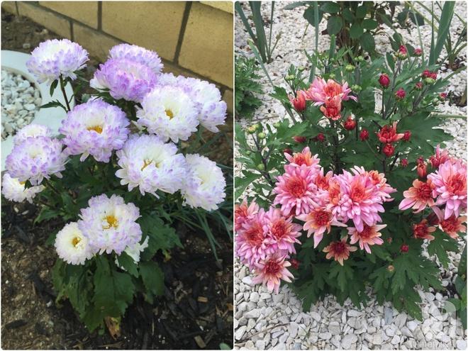 Chỉ mất 2 năm, bà mẹ trẻ đã phủ kín khu vườn rộng tới 200m² với hàng trăm loài hoa rực rỡ muôn màu - Ảnh 20.