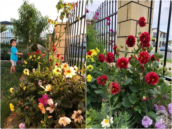 Chỉ mất 2 năm, bà mẹ trẻ đã phủ kín khu vườn rộng tới 200m² với hàng trăm loài hoa rực rỡ muôn màu - Ảnh 21.