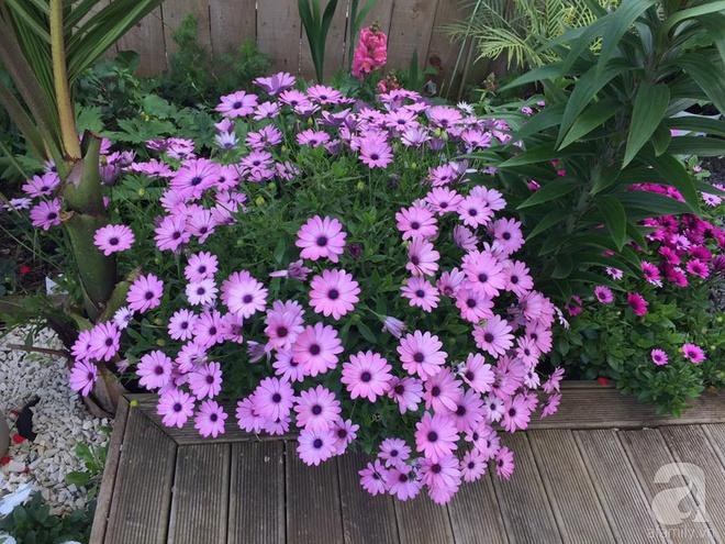 Chỉ mất 2 năm, bà mẹ trẻ đã phủ kín khu vườn rộng tới 200m² với hàng trăm loài hoa rực rỡ muôn màu - Ảnh 22.