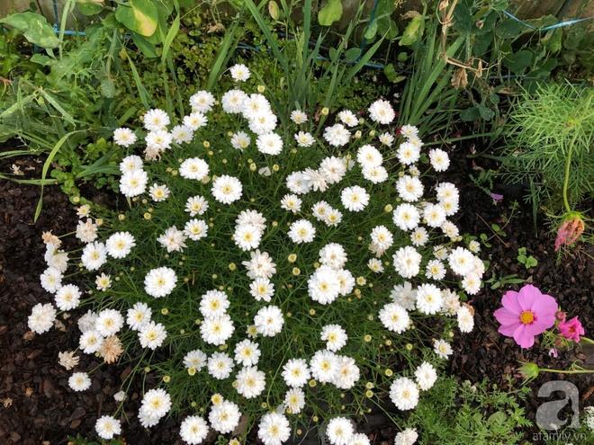 Chỉ mất 2 năm, bà mẹ trẻ đã phủ kín khu vườn rộng tới 200m² với hàng trăm loài hoa rực rỡ muôn màu - Ảnh 23.