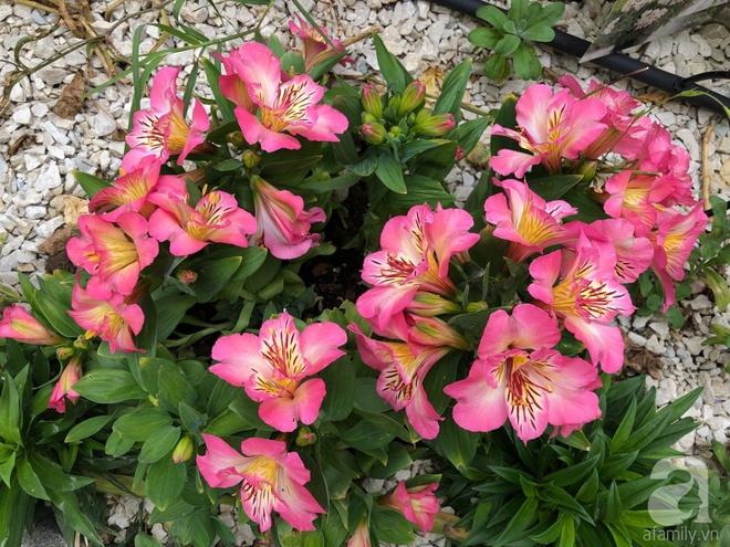 Chỉ mất 2 năm, bà mẹ trẻ đã phủ kín khu vườn rộng tới 200m² với hàng trăm loài hoa rực rỡ muôn màu - Ảnh 24.
