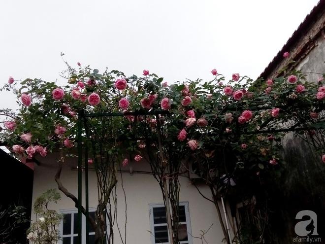 Ngôi nhà hoa hồng đẹp như thơ ở Hưng Yên của ông bố đơn thân quyết phá sân bê tông để thực hiện ước mơ   - Ảnh 4.