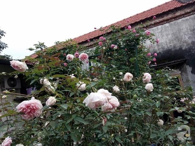 Ngôi nhà hoa hồng đẹp như thơ ở Hưng Yên của ông bố đơn thân quyết phá sân bê tông để thực hiện ước mơ   - Ảnh 7.