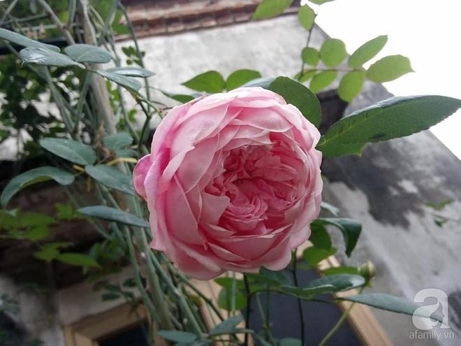Ngôi nhà hoa hồng đẹp như thơ ở Hưng Yên của ông bố đơn thân quyết phá sân bê tông để thực hiện ước mơ   - Ảnh 10.