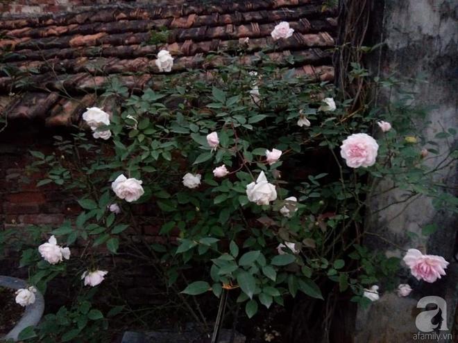 Ngôi nhà hoa hồng đẹp như thơ ở Hưng Yên của ông bố đơn thân quyết phá sân bê tông để thực hiện ước mơ   - Ảnh 11.