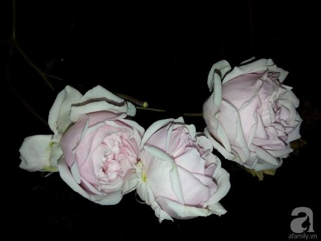 Ngôi nhà hoa hồng đẹp như thơ ở Hưng Yên của ông bố đơn thân quyết phá sân bê tông để thực hiện ước mơ   - Ảnh 12.