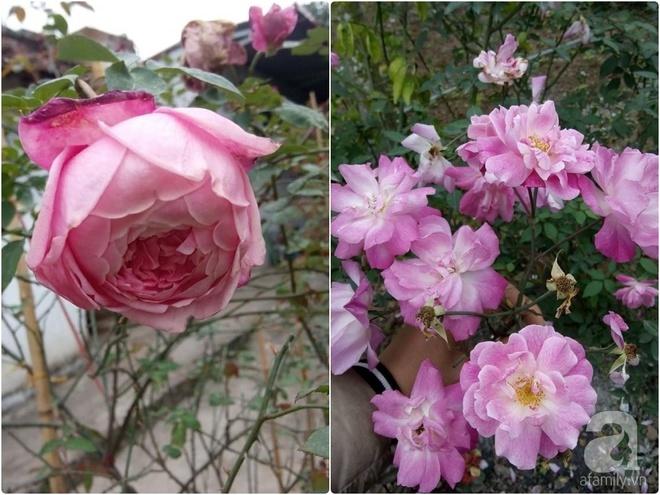 Ngôi nhà hoa hồng đẹp như thơ ở Hưng Yên của ông bố đơn thân quyết phá sân bê tông để thực hiện ước mơ   - Ảnh 15.