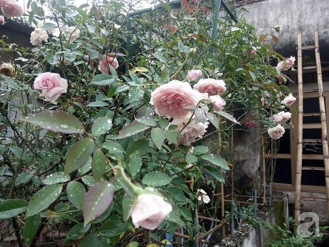 Ngôi nhà hoa hồng đẹp như thơ ở Hưng Yên của ông bố đơn thân quyết phá sân bê tông để thực hiện ước mơ   - Ảnh 19.