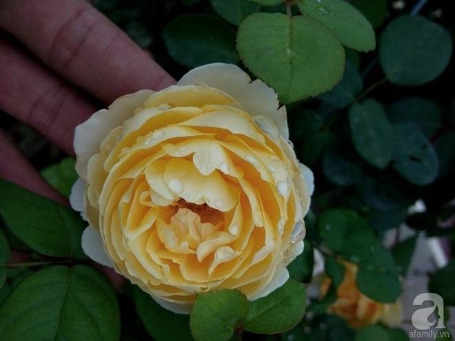 Ngôi nhà hoa hồng đẹp như thơ ở Hưng Yên của ông bố đơn thân quyết phá sân bê tông để thực hiện ước mơ   - Ảnh 20.