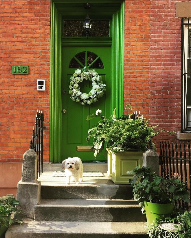 Cụ bà 75 tuổi khiến mọi người phấn khích với cuộc sống trong ngôi nhà chỉ toàn màu xanh lá - Ảnh 4.