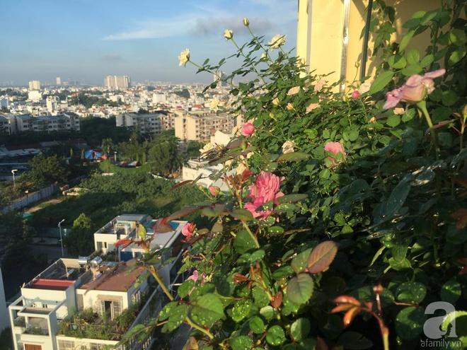 Ngắm ban công chỉ vỏn vẹn 2,2m² nhưng có tới hơn 20 chậu hồng thơm ngát ở Sài Gòn - Ảnh 6.