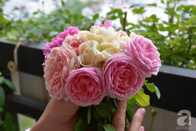 Ngắm ban công chỉ vỏn vẹn 2,2m² nhưng có tới hơn 20 chậu hồng thơm ngát ở Sài Gòn - Ảnh 13.