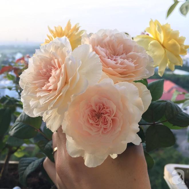 Ngắm ban công chỉ vỏn vẹn 2,2m² nhưng có tới hơn 20 chậu hồng thơm ngát ở Sài Gòn - Ảnh 17.