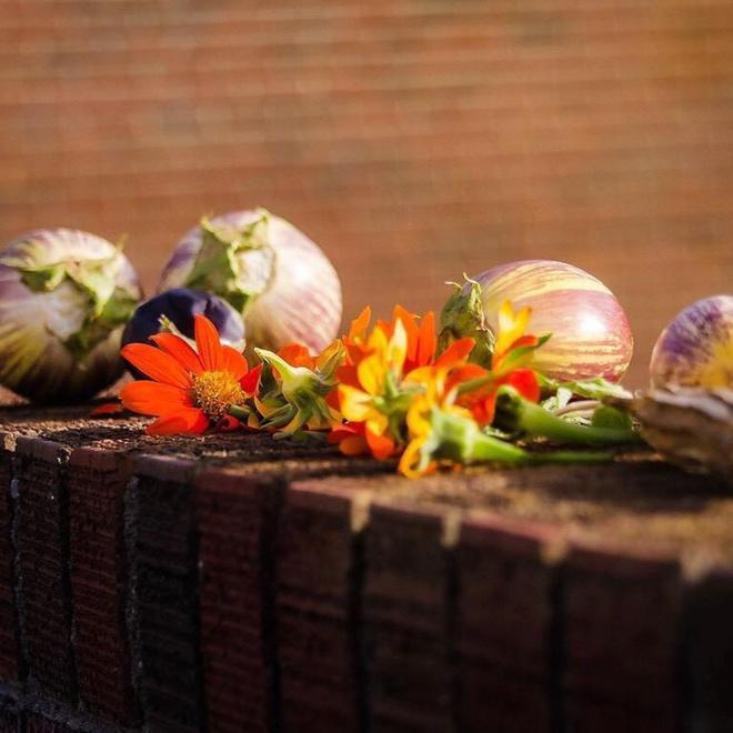 Khu vườn tạo cảm hứng cho hàng nghìn trẻ em yêu thích trồng trọt ở Mỹ - Ảnh 8.