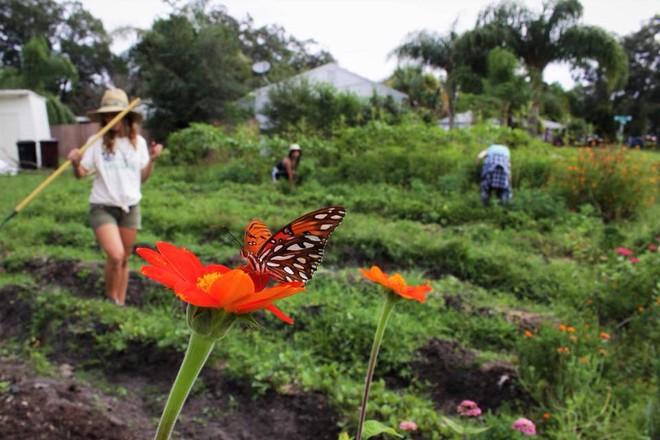Khu vườn tạo cảm hứng cho hàng nghìn trẻ em yêu thích trồng trọt ở Mỹ - Ảnh 16.