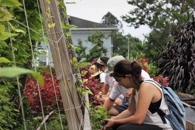 Khu vườn tạo cảm hứng cho hàng nghìn trẻ em yêu thích trồng trọt ở Mỹ - Ảnh 18.