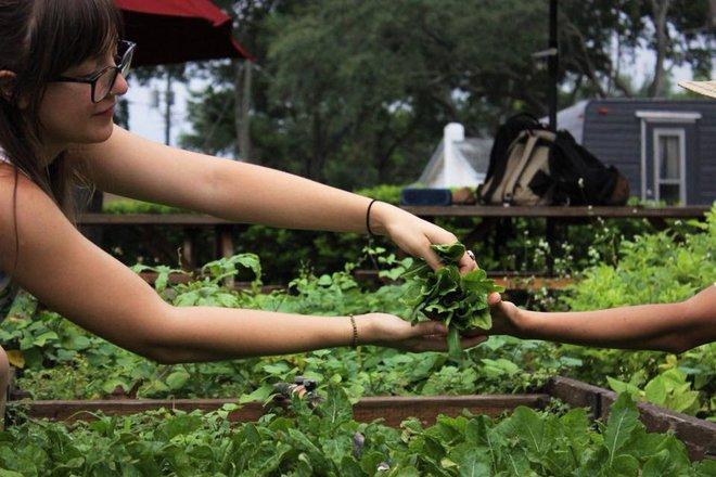 Khu vườn tạo cảm hứng cho hàng nghìn trẻ em yêu thích trồng trọt ở Mỹ - Ảnh 21.