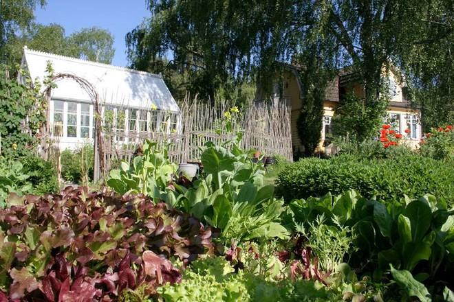 Khu vườn bạt ngàn rau quả sạch của người phụ nữ bắt đầu làm vườn từ năm 10 tuổi - Ảnh 1.