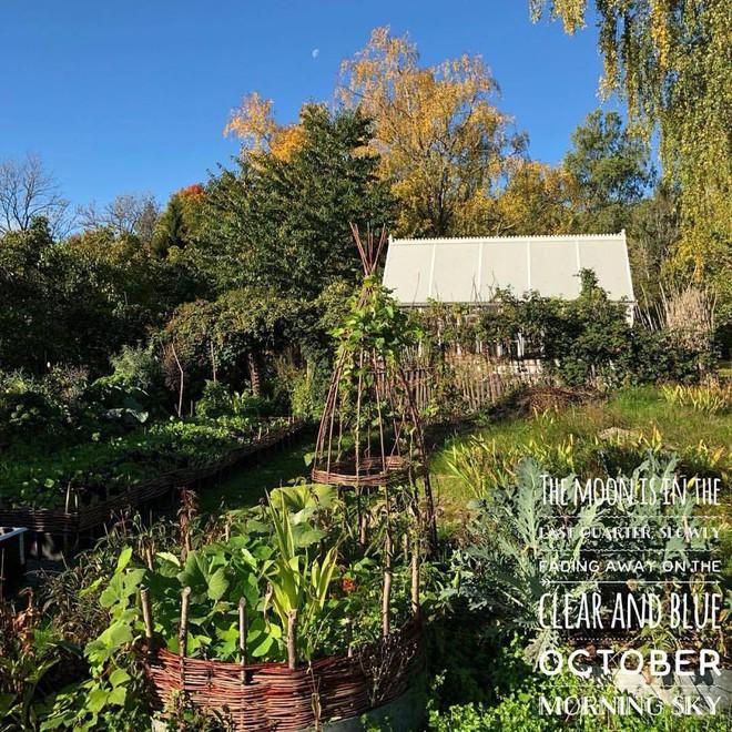 Khu vườn bạt ngàn rau quả sạch của người phụ nữ bắt đầu làm vườn từ năm 10 tuổi - Ảnh 6.